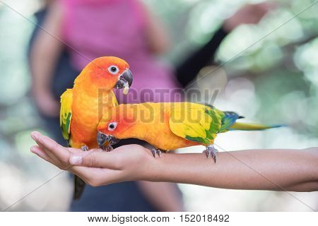 Bright yellow parrot on hand in zoo