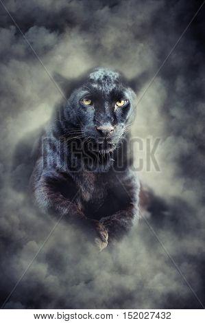 Black Leopard In Smoke