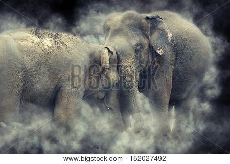 Elephant In Smoke