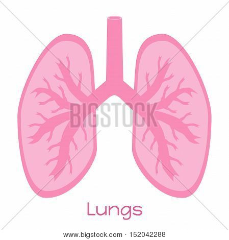 Lungs illustration in flat style. Viscera icon internal organs.