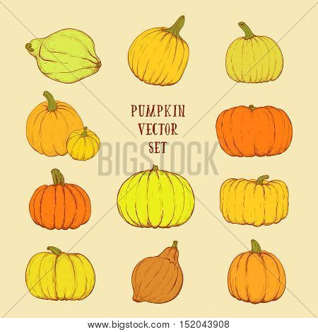 Bright pumpkin set for thanksgiving day halloween etc. Vector sketchy illustration