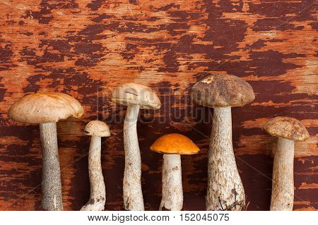 Forest And Wild Mushroom. Fresh Edible Mushrooms Brown Cap Boletus (Leccinum Scabrum) And One Orange-Cap Boletus On Old Wooden Painted Background Top View. Mushroom Brown Cap Boletus And Orange-Cap Boletus.