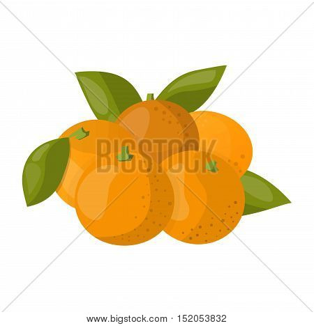 Ripe fresh orange on a white background. Orange isolated vector and juicy ripe vitamin fresh orange isolated. Orange isolated tropical healthy fruit and refreshment exotic dessert.