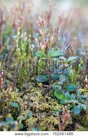 Mountain vegetation. Mountain meadow. Wild plants closeup.