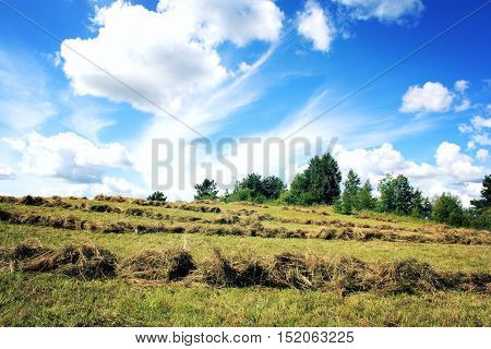 Journey to the north of Russia. Haymaking. Sunny summer day. Country field. Toned photo. Kenozersky National Park (UNESCO Biosphere Reserve).