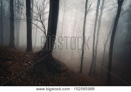 Dark mysterious forest with fog in autumn