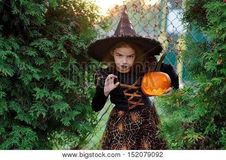 Halloween. The girl represents the angry sorcerer. She is dressed in a dark dress and a hat and holds pumpkin lamp. On a girl's face a make-up for an evil look. Against the background of a green bush.