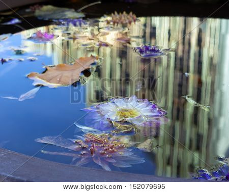 Autumn flowers in the water on the background of the building reflection