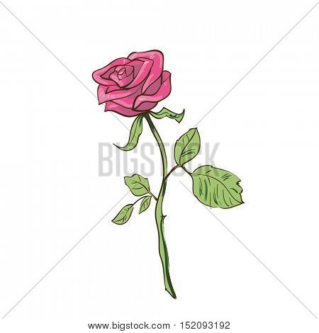 Rose - traditional flowers for bouquet. Realistic vector floral illustration. Summer blossom and branch with leaf. Rosy decoration graphic elements for your design. Isolated on white background.