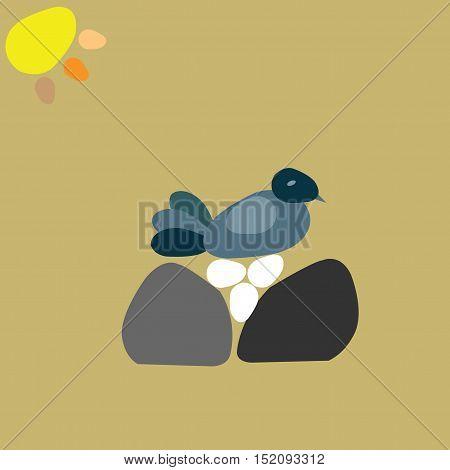 Hen in rock nest sitting on eggs