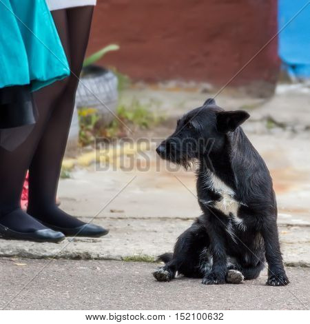 Black homeless dog is sadly looking at legs standing next to children.