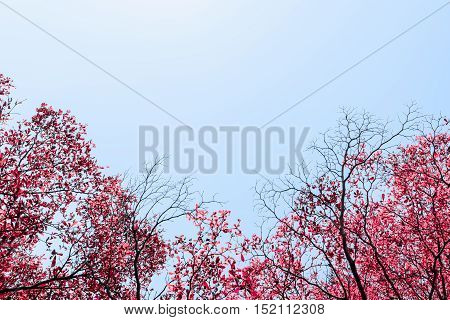 Beautiful red leaves trees on sky background