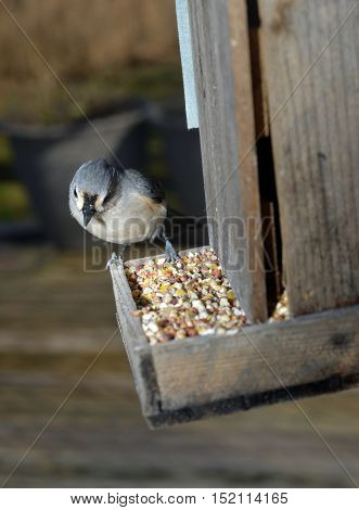 small bird eating seed at wooden bird feeder