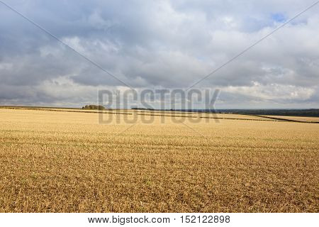 Straw Stubble And Cloudy Sky