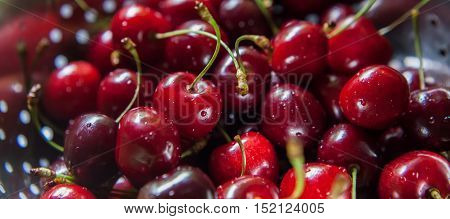 Sweet Fresh Cherries With Water Trops
