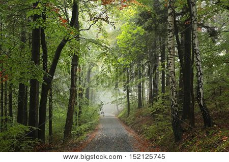 Forest path in misty weather. October, Poland.