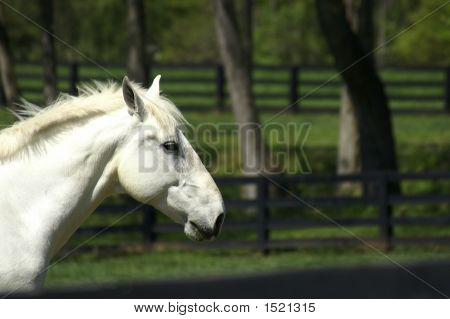 White Horse Profile
