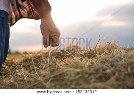 closeup of Farmer with straw bales harvest