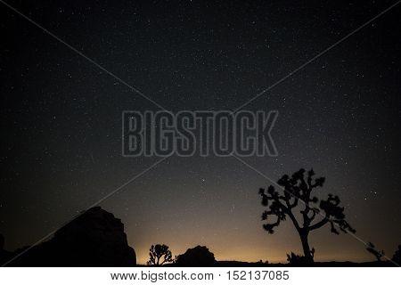 night sky at Joshua Tree National Park, California
