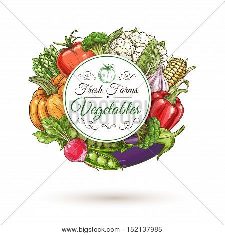 Fresh farm vegetables round badge, encircled by sketched tomato, bell pepper, eggplant, radish, broccoli, pumpkin, green pea, corn, asparagus and cauliflower