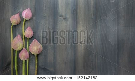top view of pink water lily over wooden background Free space for text