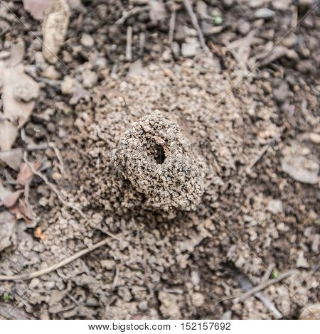Small Anthill In The Forest At Summer Cloudly Day