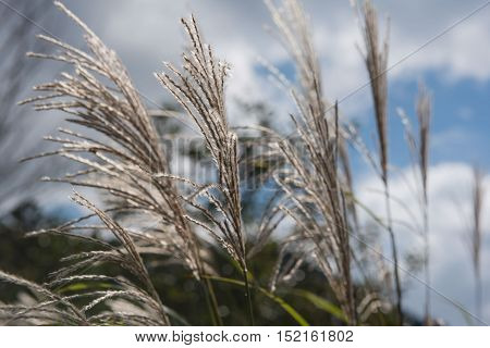 flowers grass in the morning in park for Background, Blurred