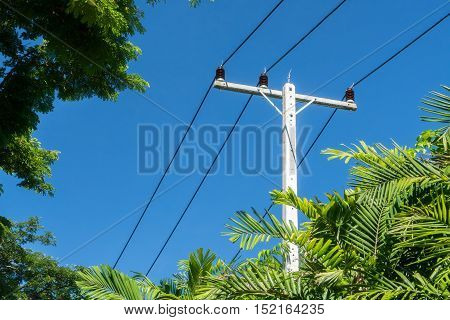 Electricity poles in the forest and a bright blue sky.