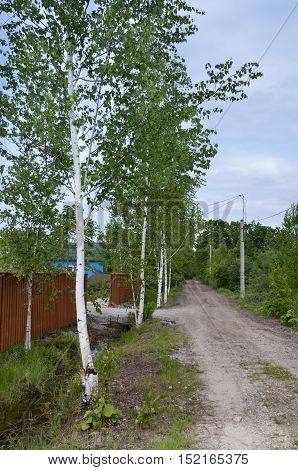 Suburban landscape along the road are birches