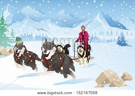A vector illustration of Man with Dogs Sledding in the Snow During Winter