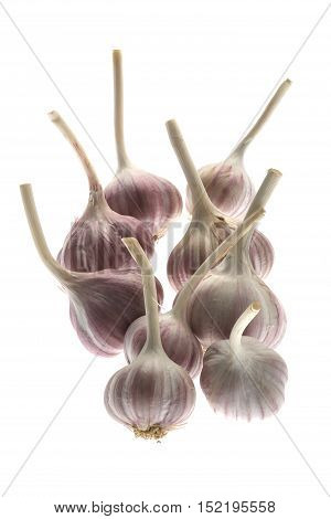 The a Garlic isolated on white background