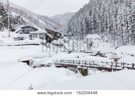 Winter landscape and forest covered with snow in Nagano, Japan