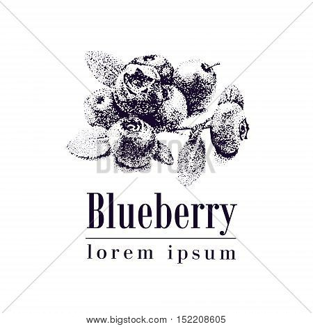 Blueberry. Blueberries Sketch Vector Illustration.