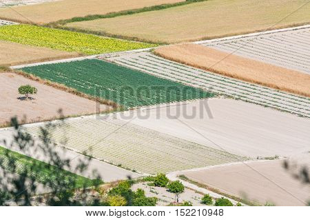 Scenics with small fields mountains and trees in the interior of Mallorca Spain.