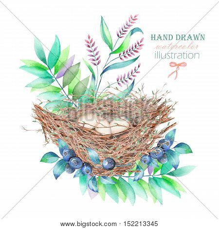 Illustration of the watercolor bird nests with eggs, in plants and berries, hand drawn isolated on a white background
