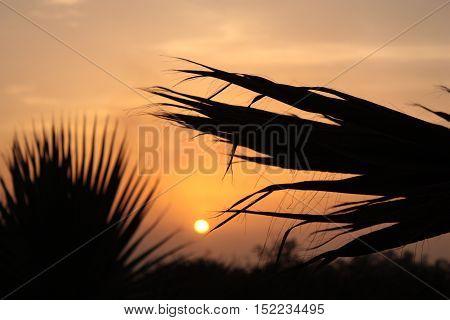 beau coucher de soleil avec focus palmier