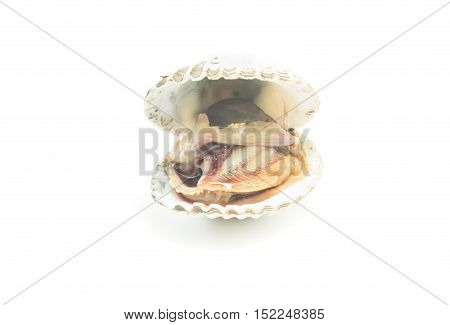 fresh cockles on a white background ,Seafood