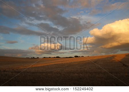 Clouds and a cornfield in summer time