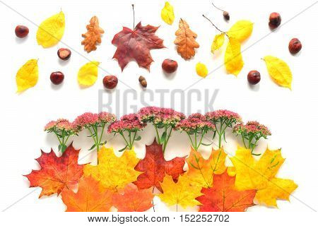 Composition with flowers, chestnuts and autumn leaves. Top view on white background. Autumn flat lay.