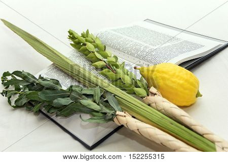 Lulav bunch of branches green branches etrog yellow on the background of the Bible