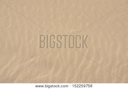 Beach sand background. Close up texture with sea sand