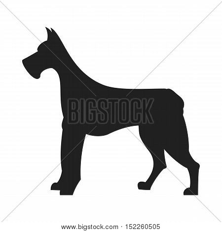 Vintage vector image of a black silhouette of a thoroughbred Great Dane dog standing straight isolated on white background looking like a shadow of the image.