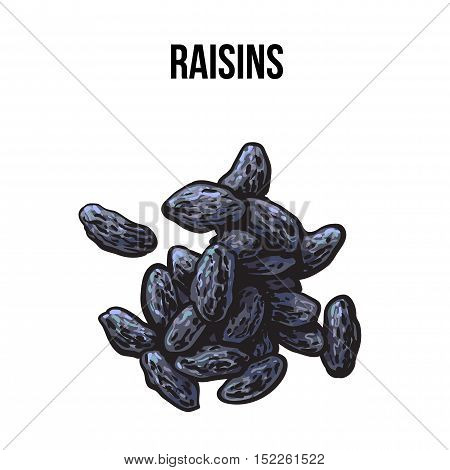 Pile of dried black raisins, sketch style vector illustration isolated on white background. Drawing of black raisins, natural sweets, vegetarian snack