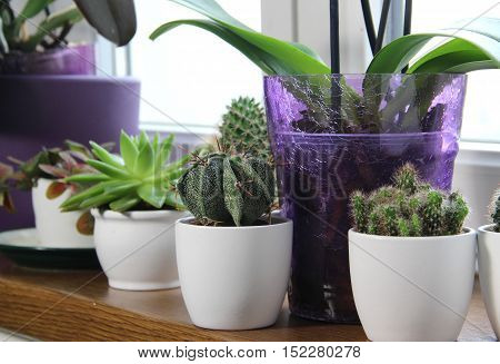Mix of beautiful houseplants and cactuses in the white pots