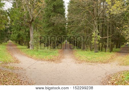 Three paths in the woods lead in different directions.
