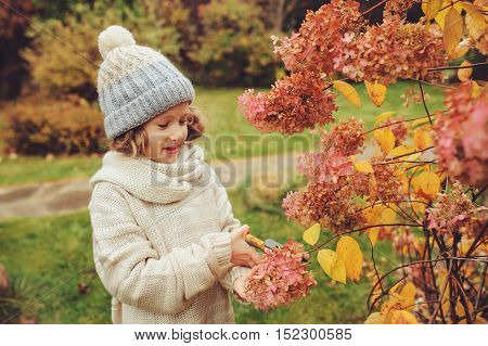 seasonal garden work in autumn child girl helps to cut hydrangea bush with pruner