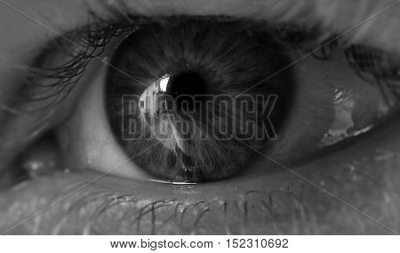 Eye, gray eye, human eye, the reflection in the human eye.
