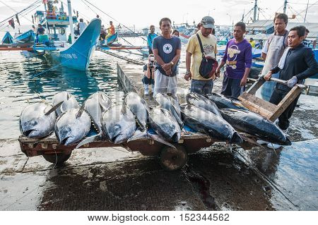 General Santos City - September 1 2016: Yellowfin tuna being unloaded at the Tuna Harbor in General Santos City South Cotabato The Philippines. General Santos is the Tuna Capital of The Philippines and the tuna industry is an important contributor the the