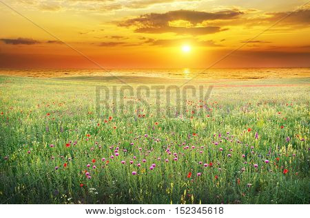 Spring meadow of violet flower. Nature composition.