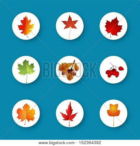Set of autumn leaves in flat style . Vector illustration .